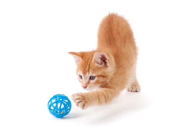 Katzenfutter und Katzenzubehör kaufen im Raum Münster und Potsdam