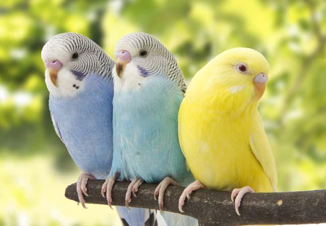 Vogelfutter, Vogelkäfige und Vogelzubehör in Münster und Potsdam